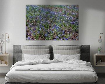 Un champ de bleuets sur Karina Baumgart