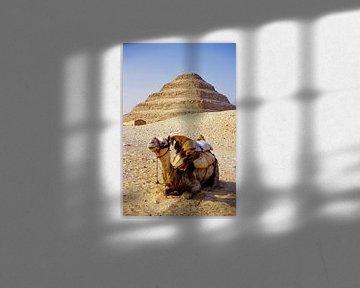 The Camel withe the Sakkara Pyramid - Analoge Fotografie!