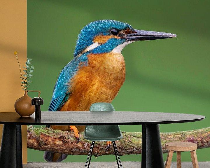 Sfeerimpressie behang: Ijsvogel in super scherp kwaliteit van Rando Kromkamp