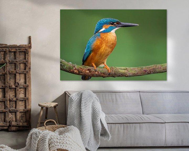 Sfeerimpressie: Ijsvogel in super scherp kwaliteit van Rando Kromkamp