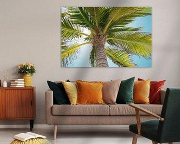 Palmboom van Chantal van der Hoeven