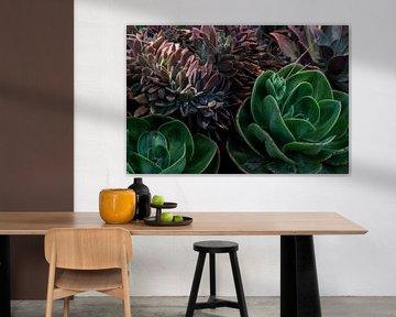 Fettpflanzen von Chantal van der Hoeven