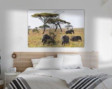 Faune africaine : Groupe d'éléphants d'Afrique dans les plaines herbeuses du parc national du Sereng sur Koolspix