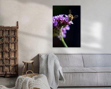 Biene auf einer Blume von Nynke Altenburg