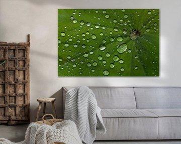 Regentropfen von MSP Canvas