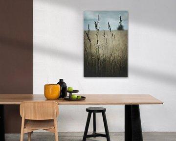 Sommerwiese mit Gras von Thilo Wagner