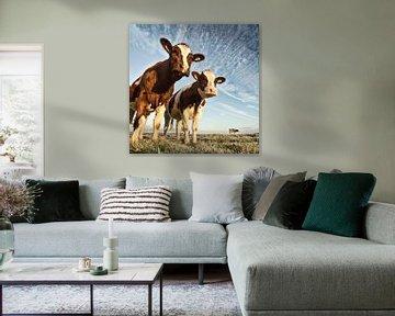 Kühe in einem Polder