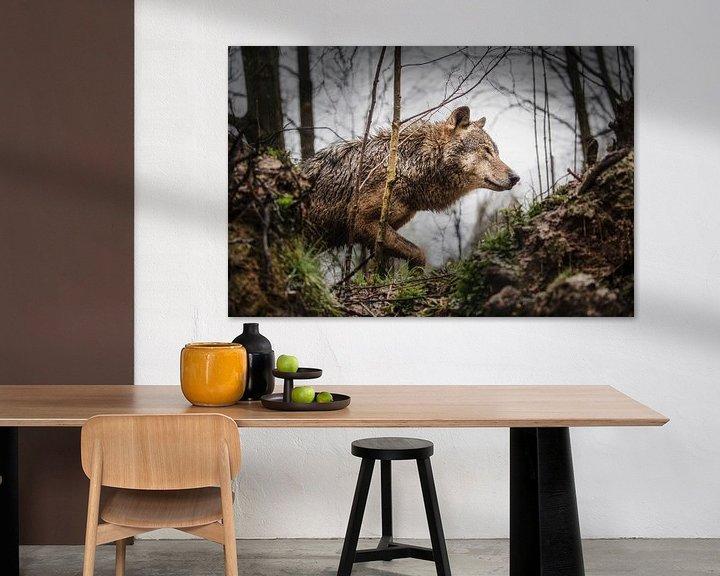 Impression: Le loup gris sur Frans Lemmens