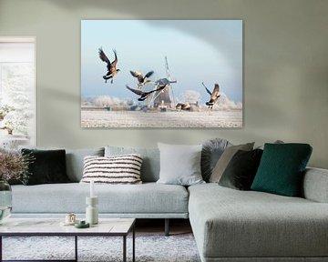 Les oies canadiennes s'envolent près d'un moulin à vent en hiver