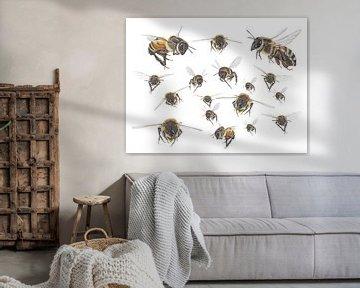 Flug der Honigbiene von Jasper de Ruiter