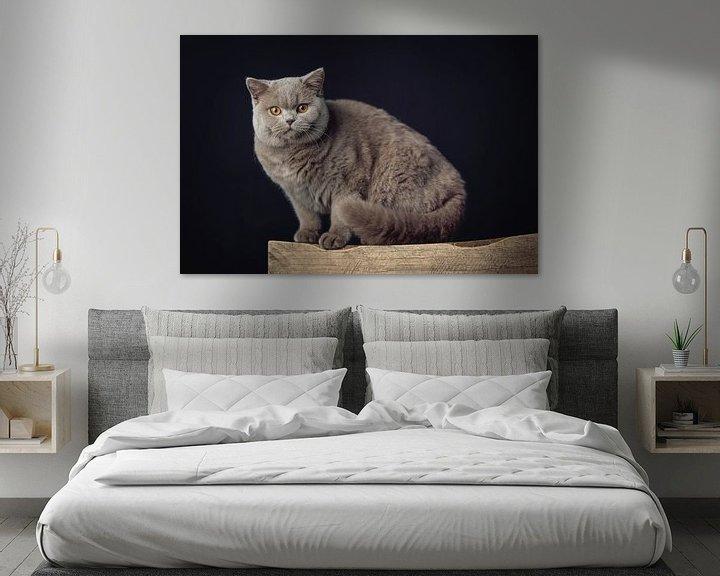 Impression: Un très beau chat British Shorthair posant sur un tabouret en bois sur Jan de Wild