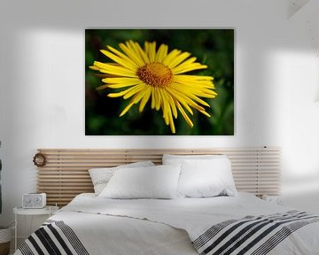 Sonnige Blume_SvD von Stefanie van Dijk