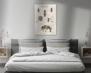 Anatomie der Honigbiene von außen von Jasper de Ruiter