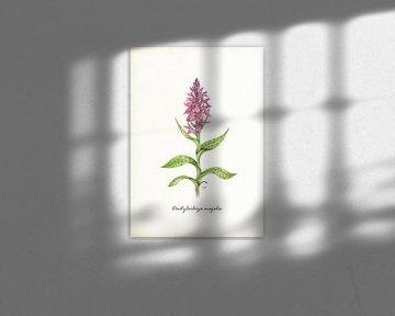 Brede orchis van Jasper de Ruiter