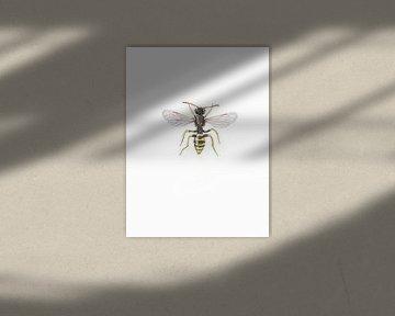 Gelb-schwarze Wespenbiene (Bienen) von Jasper de Ruiter