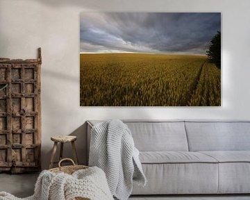 dunkle Wolken über dem Getreidefeld cote d'ore von wil spijker
