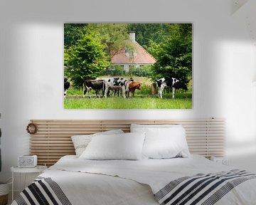 Kühe in den Wäldern bei Lage Vuursche von Ivonne Wierink