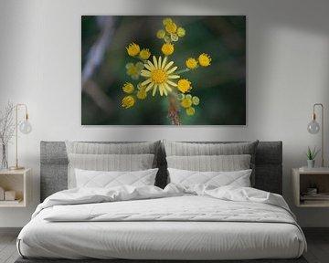 gelbe Pracht von oben fotografierte Makrofotografie von wil spijker