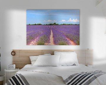 Lavendel veld in Frankrijk van Ivonne Wierink