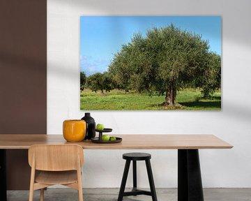 Olivenbäume auf dem Feld von Ulrike Leone