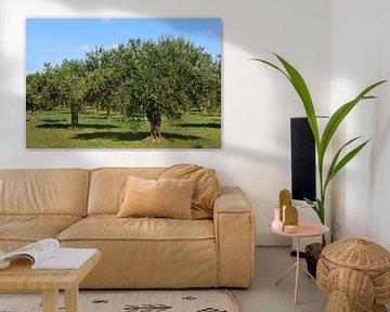 Olijfbomen op Sicilië van Ulrike Leone
