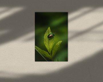 Bunter Käfer von Thilo Wagner