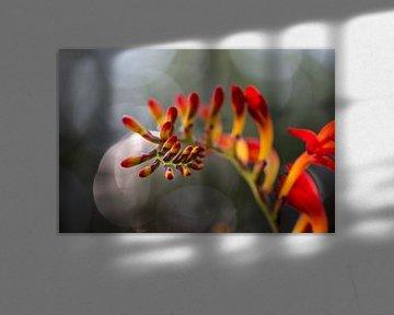gelb-orange und rot von Tania Perneel