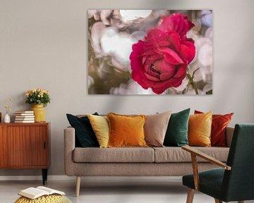 schöne Rosen von Tania Perneel