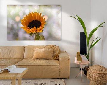 Sonnenblume und Sonnenlicht von Tania Perneel
