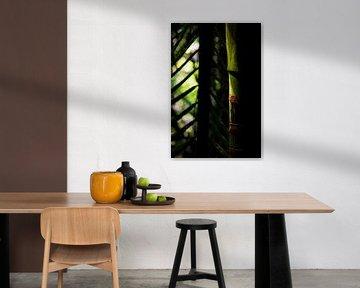 Detailfoto van abstracte bamboe in Nieuw-Zeeland van Paul van Putten