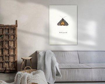 Hausmutter (Motte) von Jasper de Ruiter