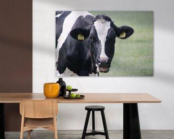 Loeiende koe von Monique Meijer