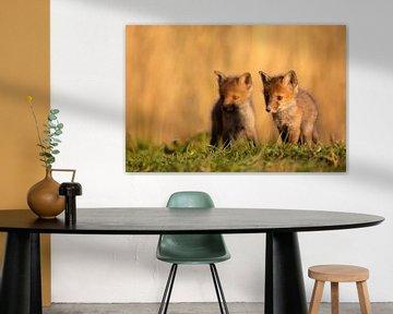 Jonge vosjes van Aukje Ploeg