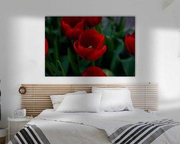 Tulpe von Tim Moeremans