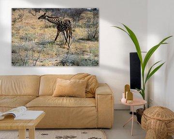 Giraf met zijn poten gespreid. van Merijn Loch