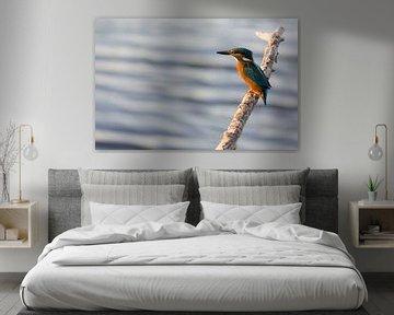 IJsvogel turend over het water vanaf een tak van Bianca Fortuin