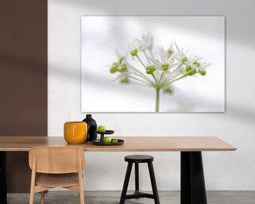 Witte bloem van Sandra Estupinan
