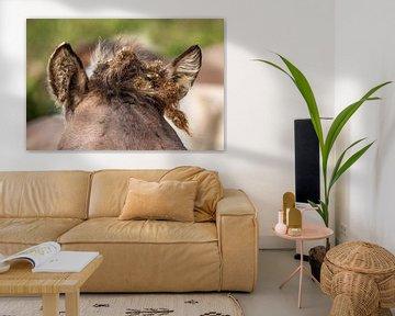 Konikpaard kuif van Inge Wiedijk