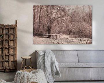 Winterdag in het bos van Nancy van Verseveld