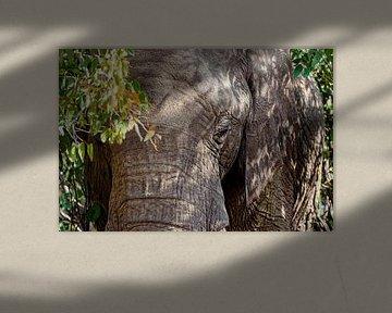 Woestijnolifant van Tilo Grellmann | Photography