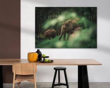 Wilde olifanten familie van Edgar Bonnet-behar