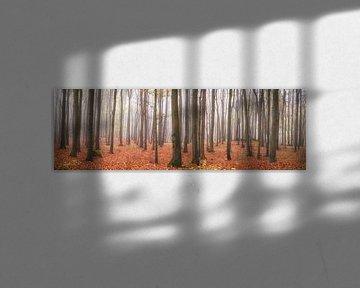 L'automne dans la forêt de hêtres