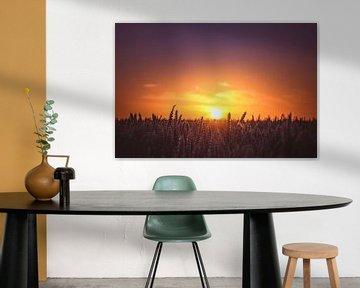 Zonsondergang boven de graanvelden. van Nicky Kapel