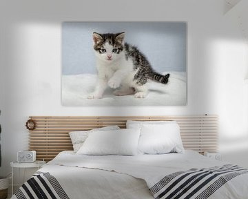 Ensor die Katze - 6 Wochen alt von Albert Verborgh