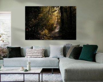 Bossen, Eerste zonnestralen in het bos van Henk Elshout