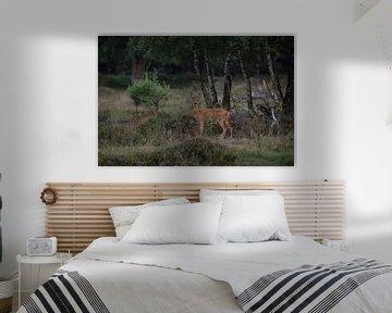 Een reegeit met haar kalf op natuurgebied Planken Wambuis van Eric Wander