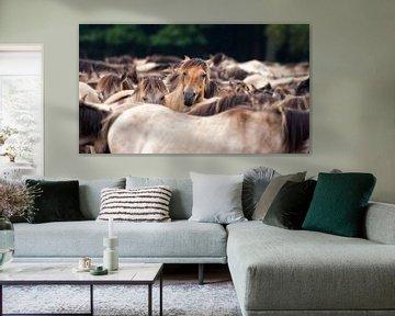 Wilde Paarden van Friedhelm Peters