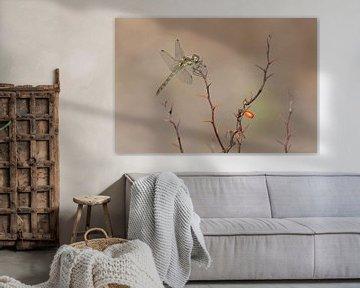 Steenrode heidelibel op de zuurbes van Eric Wander