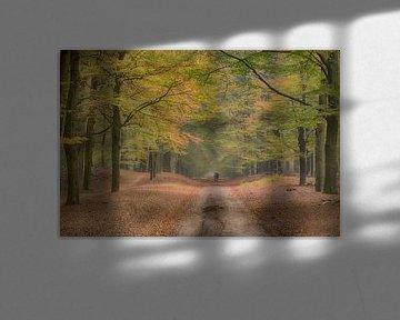 Beukenlaan in Ede, Nederland, Natuurgebied Planken Wambuis van Eric Wander