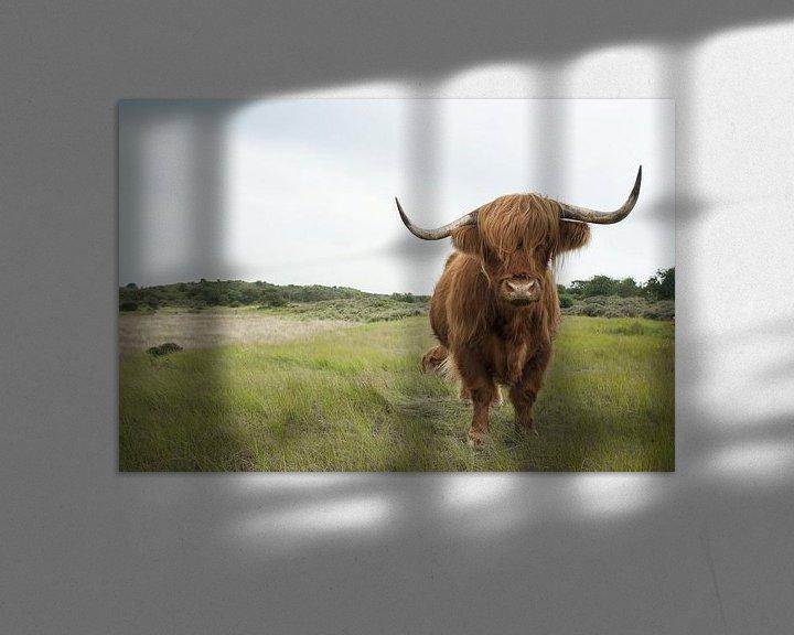 Sfeerimpressie: Schotse Hooglander in het duingras van Sander Jacobs